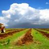 Китайці візьмуть в оренду 3 млн гектарів української землі на півстоліття?