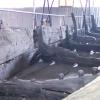 Американці допомагають реставрувати козацькі судна у Запоріжжі