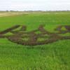 Полями України ширяться тризуби: новий з'явився під Скадовськом